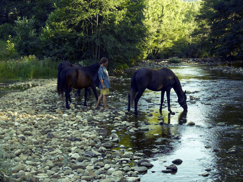 Horses drinking in the river